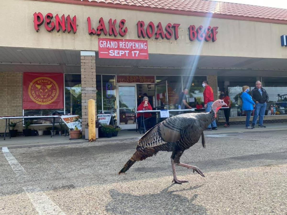 When Penn Lake Roast Beef re-opened, Penny was one of the first ones in line.