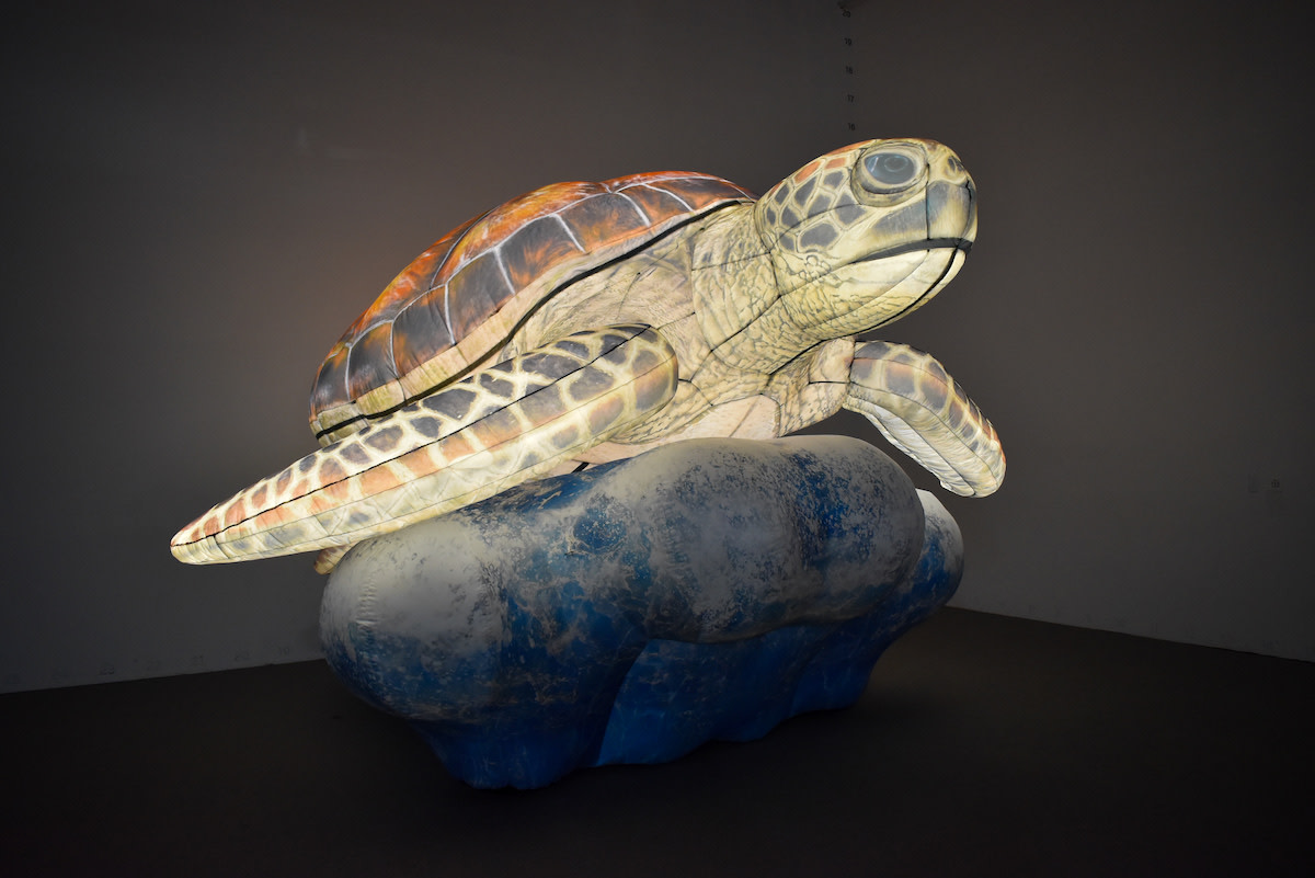MNZoo_Nature Illuminated Sea Turtle