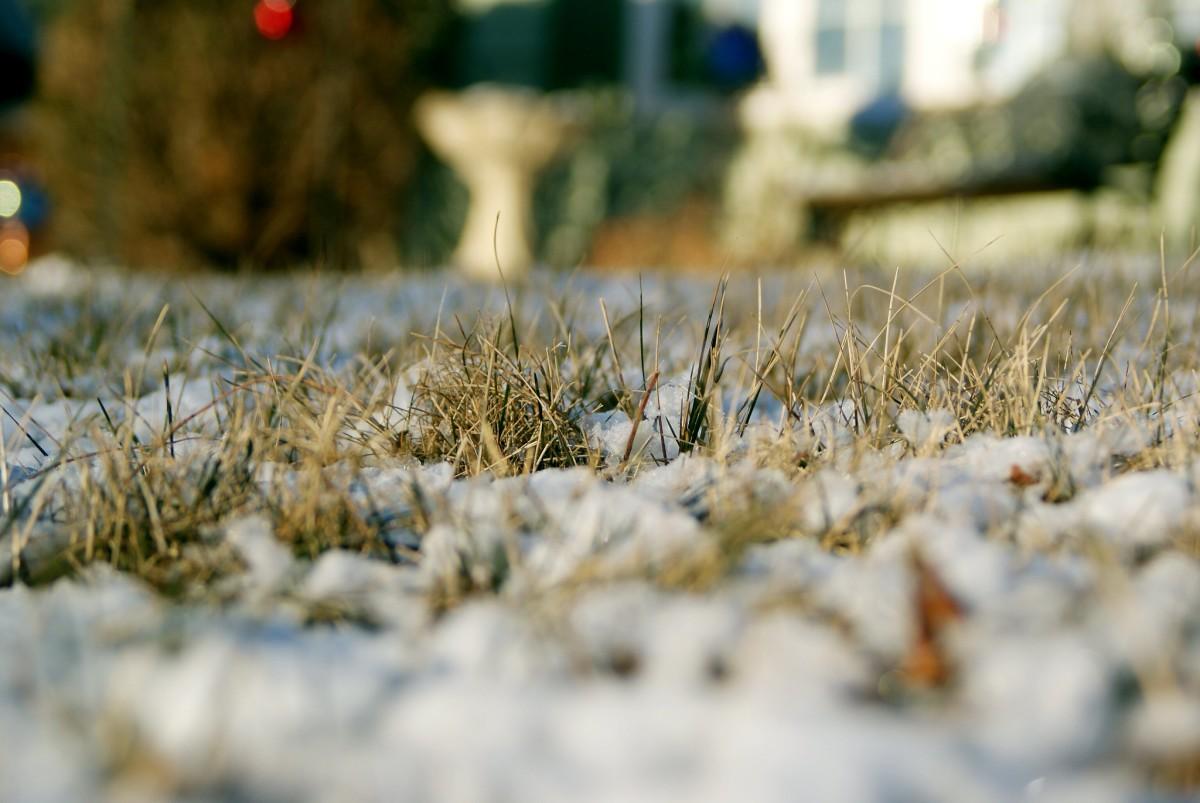 snow, brown grass, white Christmas