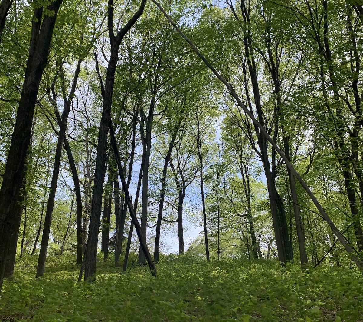 Forest - orono, Minnesota