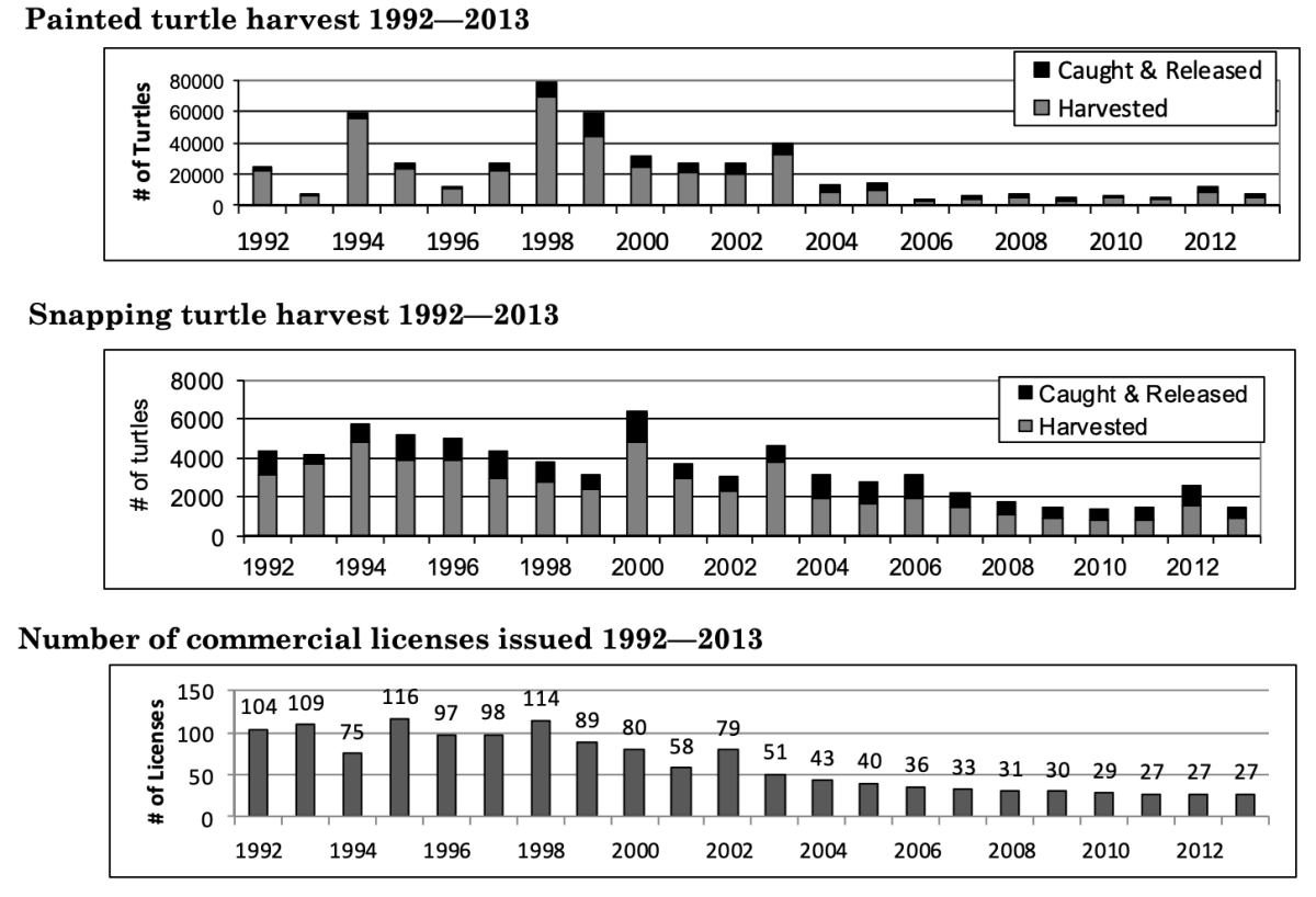 The Minnesota Commercial Turtle Harvest report for 2012-2013 looks at how many turtles were harvested each year from 1992 to 2013.