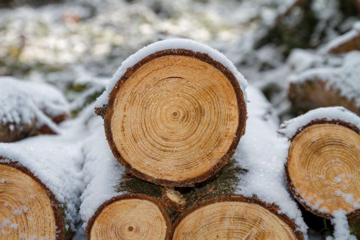 Logs wood