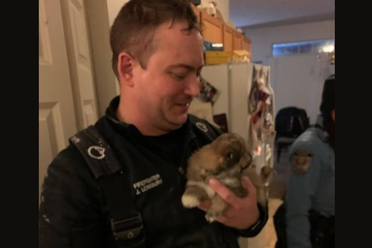 Puppy rescue in Plymouth.