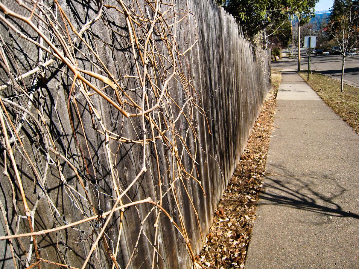 spring, sidewalk