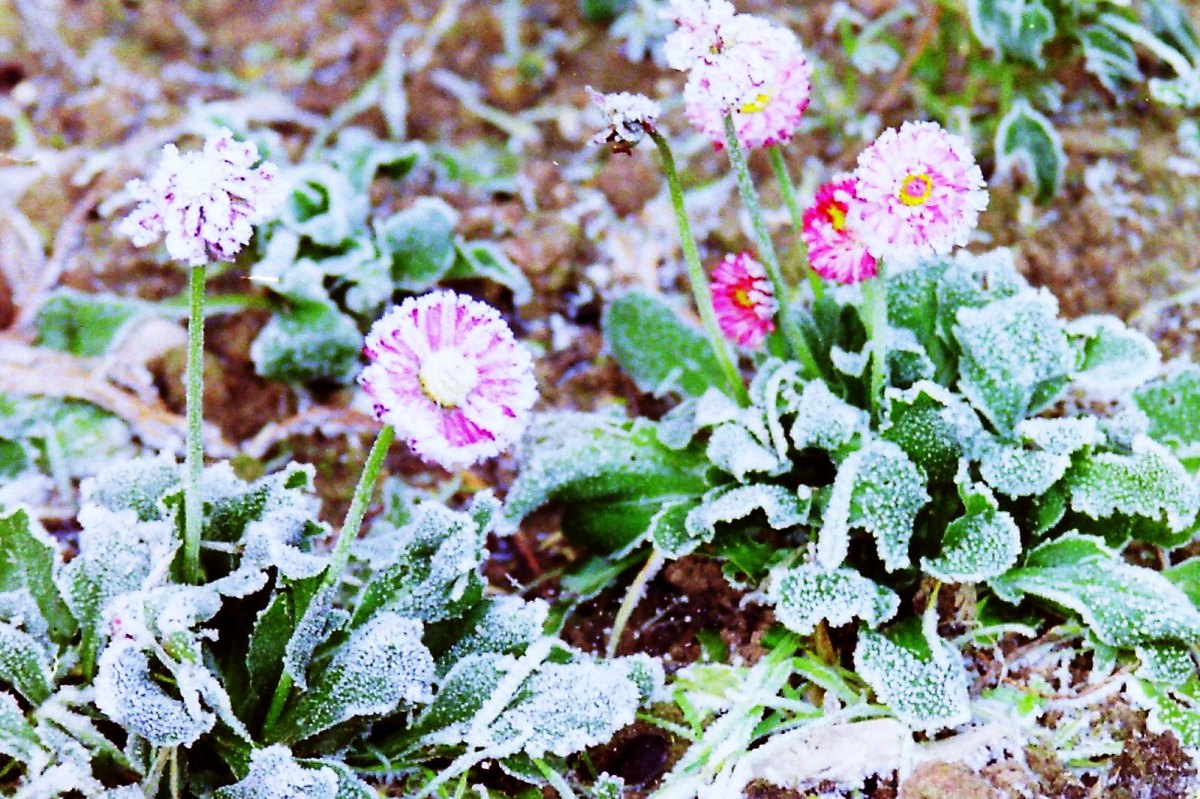 frost, freeze