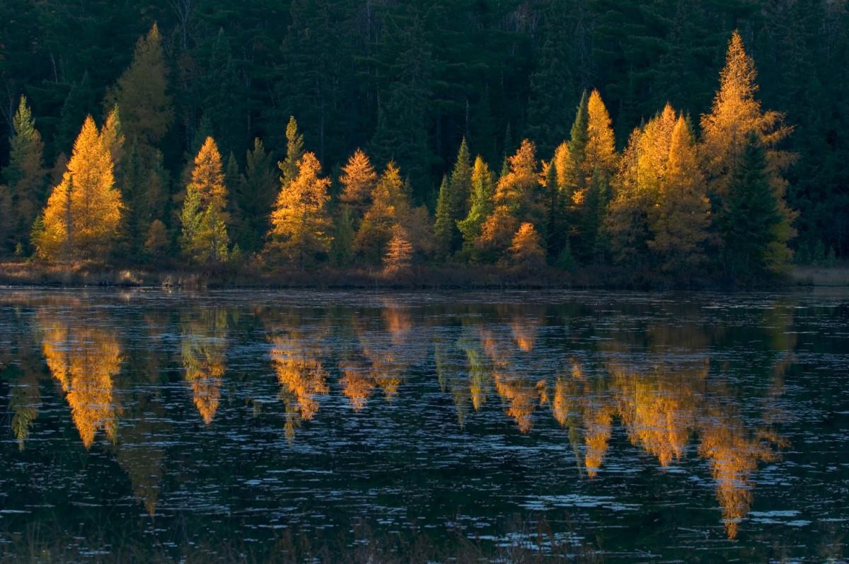 Tamarak reflections - potlatch
