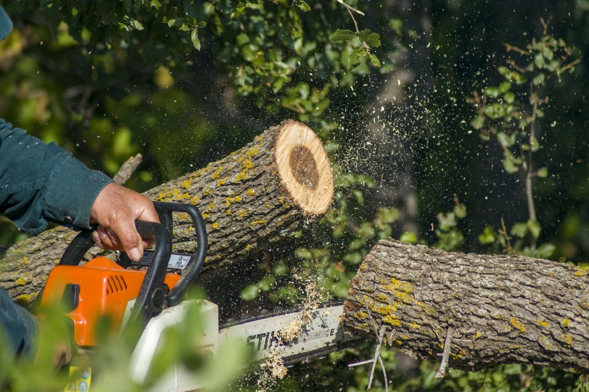 pixabay - tree chainsaw trunk trim cut