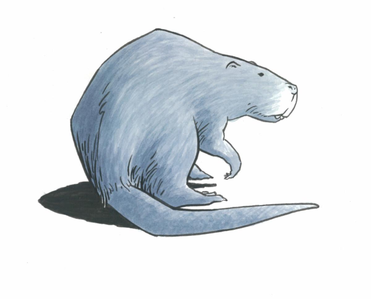 The giant beaver.