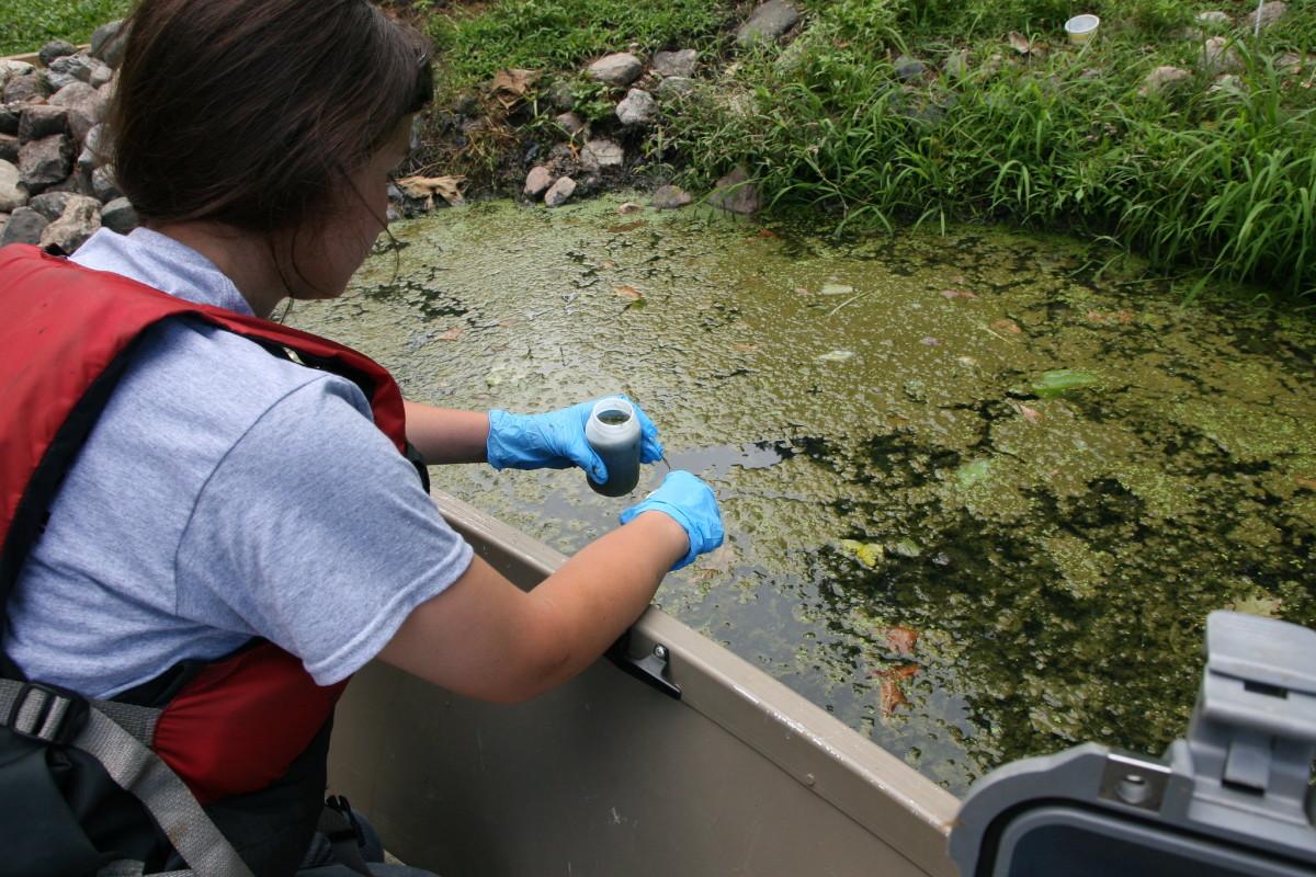 Flickr - toxic algae bloom - MPCA Photos